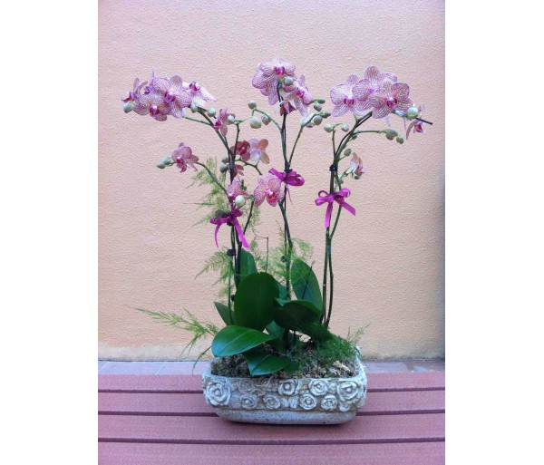 O12 4 STEMS OF PINK ORCHIDS IN CARAMIC POT